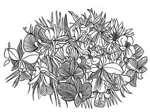 carson_flowers